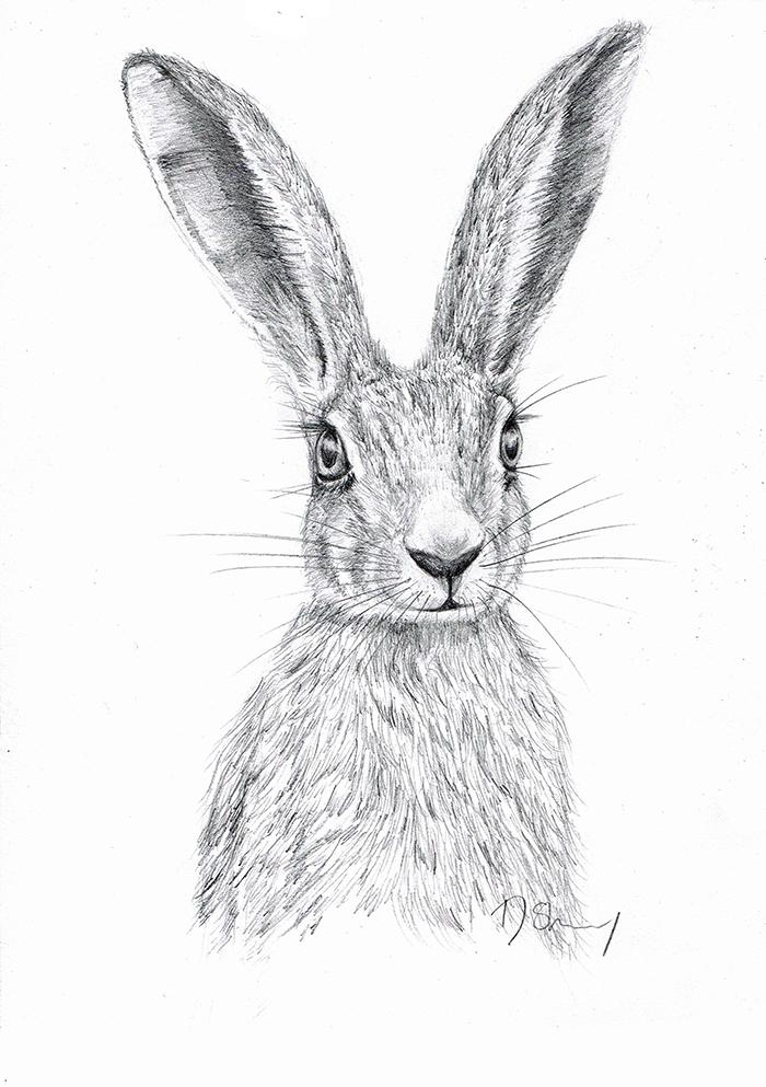Pencil sketch of a pretty hare