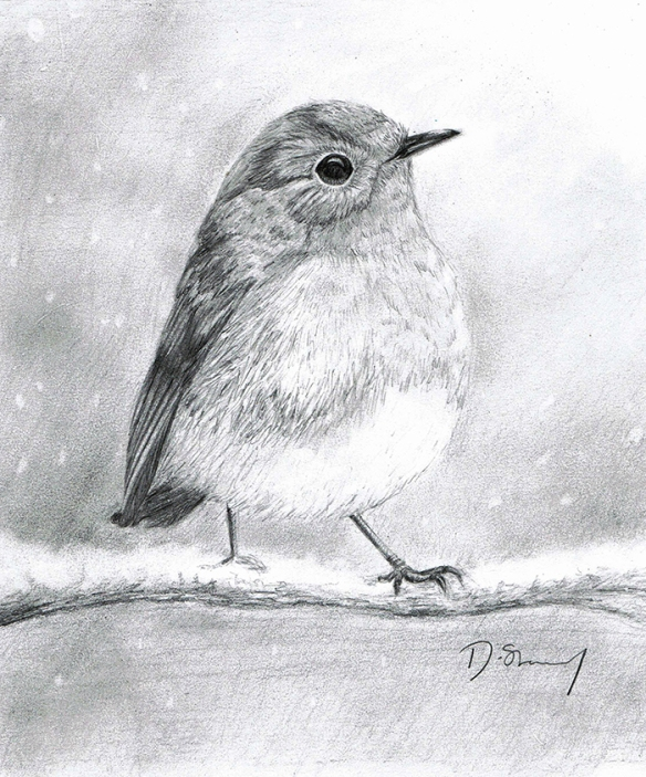 Pencil drawing of a Robin in the snow